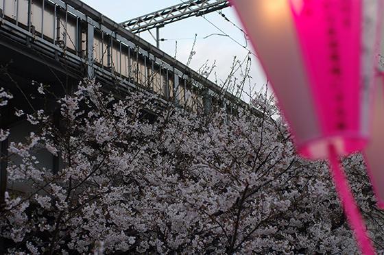 目黒川沿いの桜 2014 2