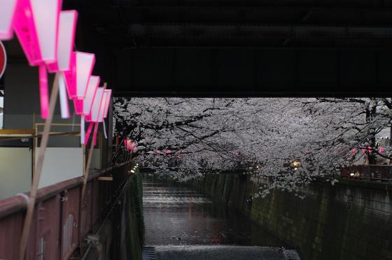 目黒川沿いの桜 2014 3