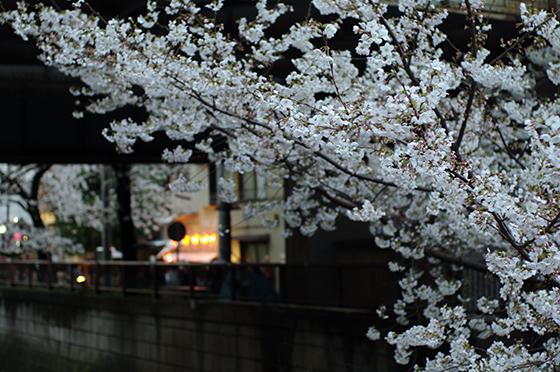 目黒川沿いの桜 2014 4