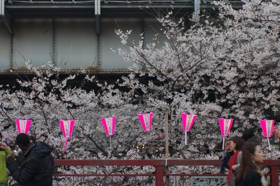 目黒川沿いの桜 2014 6