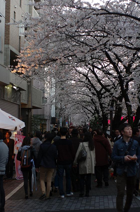 目黒川沿いの桜 2014 11
