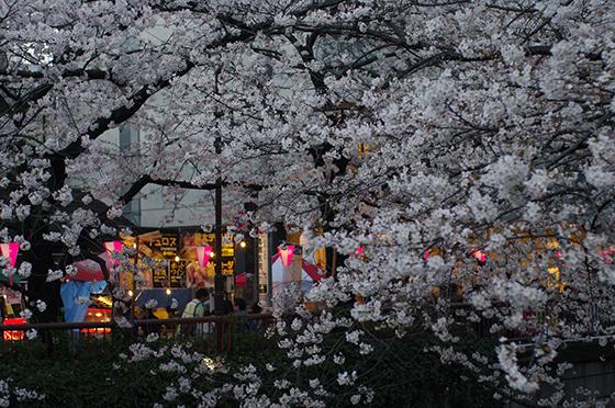 目黒川沿いの桜 2014 16