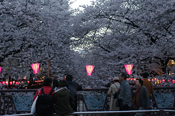 目黒川沿いの桜 2014 19