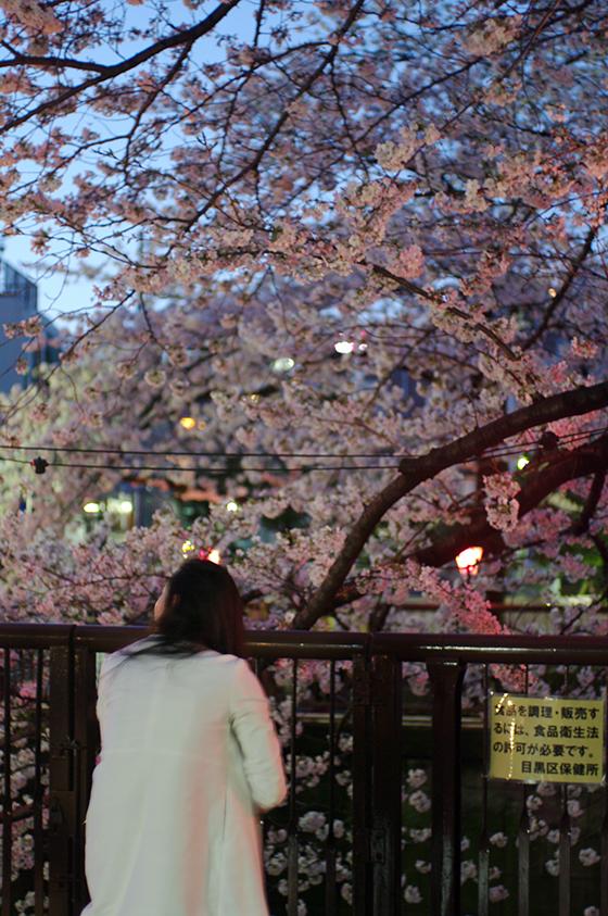 目黒川沿いの桜 2014 22